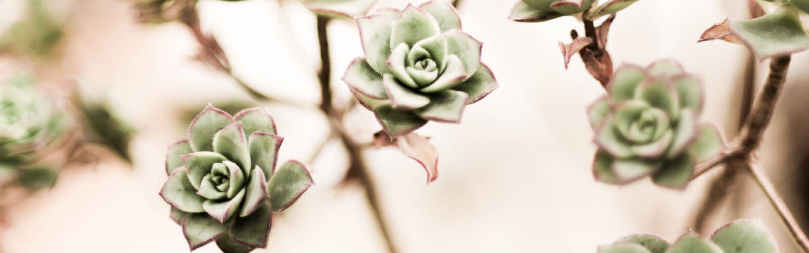 testimonial background with succulents